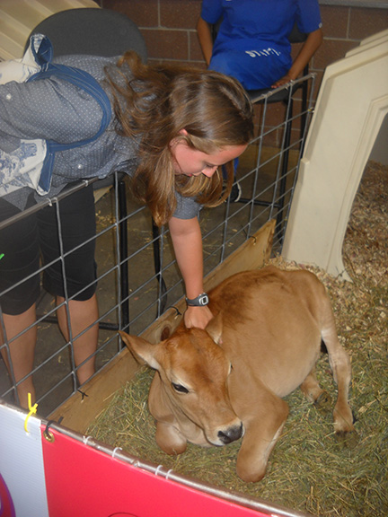 Susanna pets a baby calf.