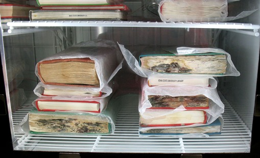 Mold-infested collection materials in the freezer.