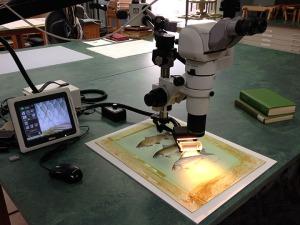 MicroscopicExamination
